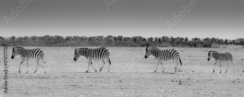 Furniture stickers Zebra Zebra crossing