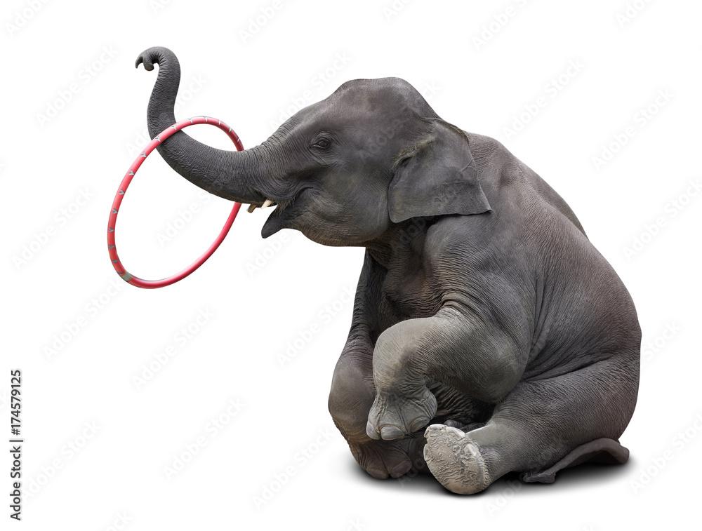Elephant playing hulahoop