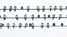 The Sleeping Birds On A Wire
