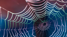 Beautiful Colorful Web With Dark Blurred Background In HD Ratio 16x9. Dewy Spider Web As Internet And Technology Danger Concept. Small Depth Of Sharpness.