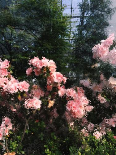 Deurstickers Azalea Flowers through the glass in water drops