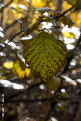 Fotografie, Obraz  Single Green Leaf