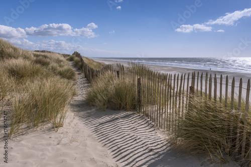 Fotografie, Obraz  Les dunes du Marquenterre à Fort-Mahon.