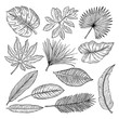 Tropical leaves and plants. Vector hand drawing pictures isolate
