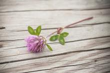 Fleur De Trèfle Sur Une Table...