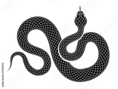 Vászonkép Vector snake outline isolated on a white background.