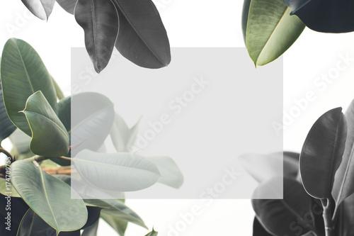 Foto op Canvas Bloemen ficus plant with blank card