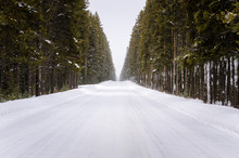 Snow Covered Road Through A Forest During A Snowstorm