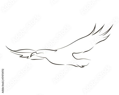 Valokuva  Flying black line eagle on white background