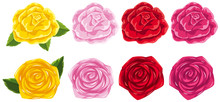 Four Different Colors Of Roses