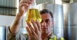 Worker examining olive oil