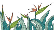 Hand Drawn Tropical Heliconia With Leaves
