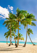 Exotic high palm trees, wild beach azure waters, Caribbean Sea, Dominican