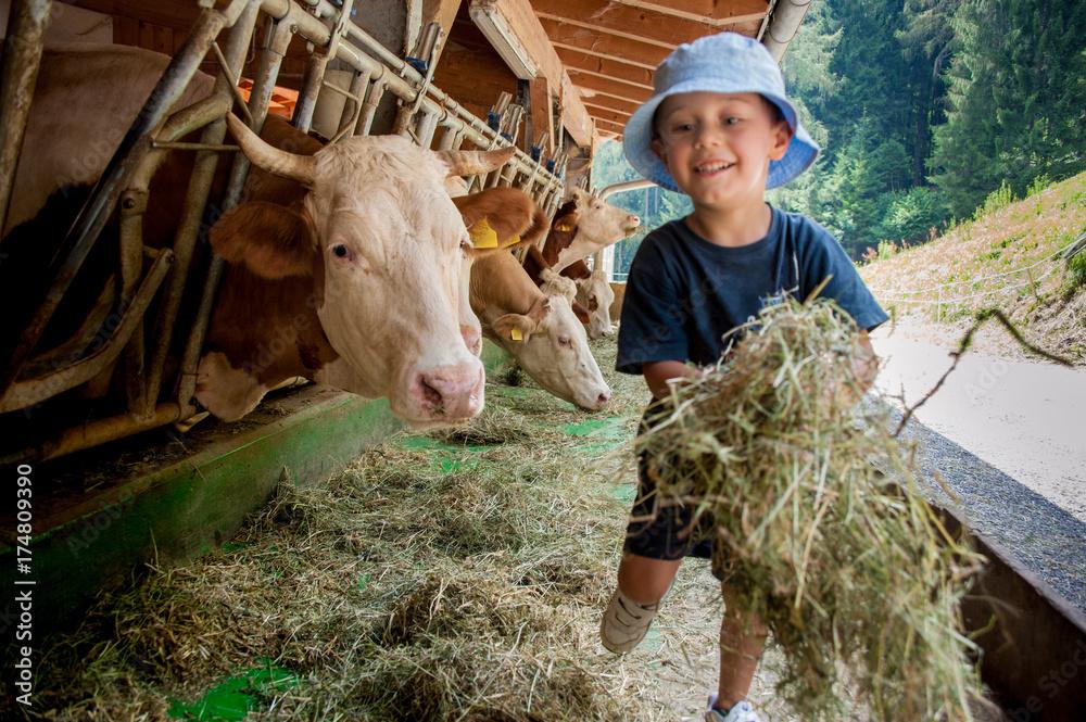 Fototapety, obrazy: Un bambino con cappellino si occupa delle vacche giocando con loro e portandogli il fieno nelle mangiatoie