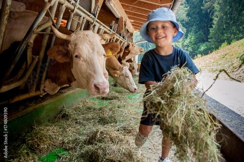 Foto  Un bambino con cappellino si occupa delle vacche giocando con loro e portandogli