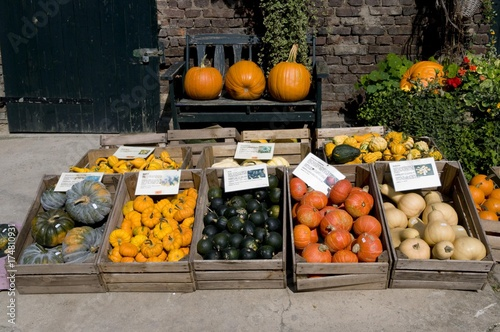 Photo  Crates of pumpkins, Kamen, Ruhrgebiet area, North Rhine-Westphalia, Germany, Eur