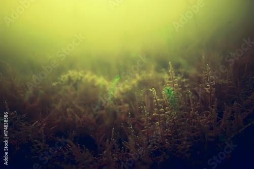 Keuken foto achterwand Waterlelies seaweed underwater freshwater