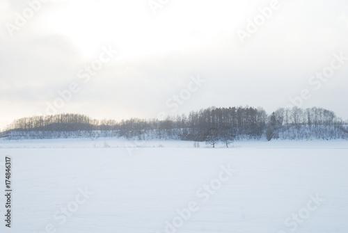 Fotografie, Obraz  冬の道東の雪原(北海道)