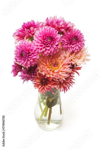 Bouquet flower of beautiful fashionable pink dahlia ia a vase isolated on white background. Botanical, concept, flora, idea. Pomponic form. Macro, nature