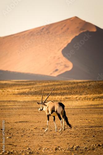 Zdjęcie XXL Sossusvlei, pustynia Namib, Namibia, Afryka