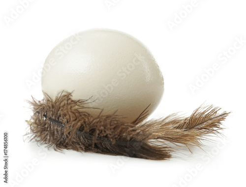 Ostrich egg and feathers on white background