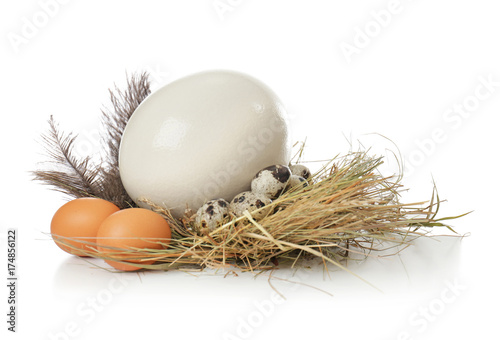 Composition with ostrich, chicken and quail eggs on white background