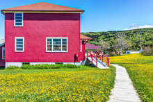 Red Painted Shed House With Yellow Dandelion Flowers In La Martre In The Gaspe Peninsula, Quebec, Canada, Gaspesie Region