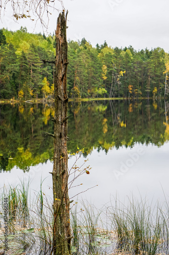 Fototapety, obrazy: Beautiful autumn forest near the water