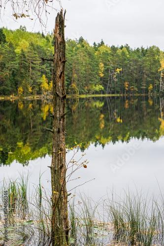 Foto op Canvas Bomen Beautiful autumn forest near the water