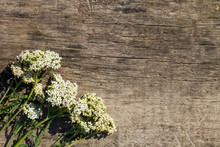 White Yarrow Flowers (Achillea Millefolium) On Wooden Background