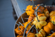 Closeup Of Small Orange And Yellow Gourds Background