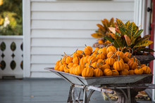 Wheelbarrow Of Little Pumpkins...