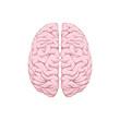 Human brain right and left hemisphere illustration. Creative concept vector design.