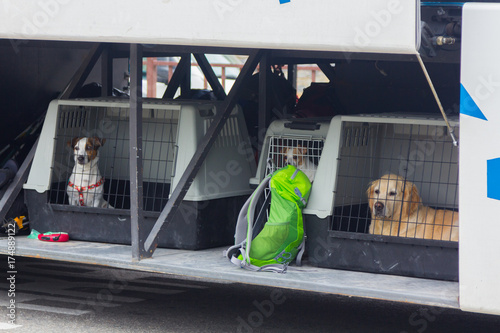 Photo  Puppies in a travel cage