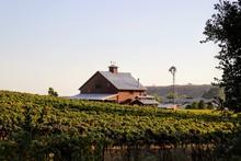 Red Barn In An Autumn Vineyard