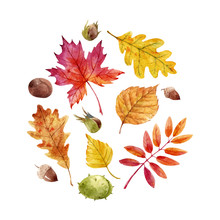 Watercolor Fall Leaves Vector ...