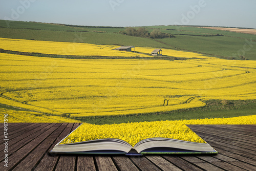 In de dag Oranje Beautiful landscape image of ripe rapeseed canola crop in Spring in English countryside concept coming out of pages in open book