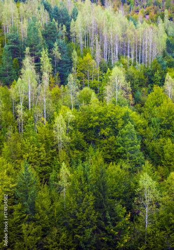 Deurstickers Groene Forest, Bosnia and Herzegovina