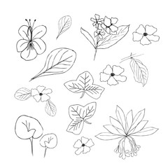 Collection of hand drawn flowers and plants. Monochrome vector illustrations in sketch style
