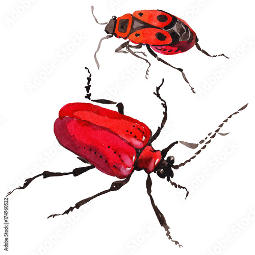 d9d02caa78520 Exotic beetle wild insect in a watercolor style isolated. Full name of the  insect: soldier-beetle. Aquarelle wild insect for background, texture, ...