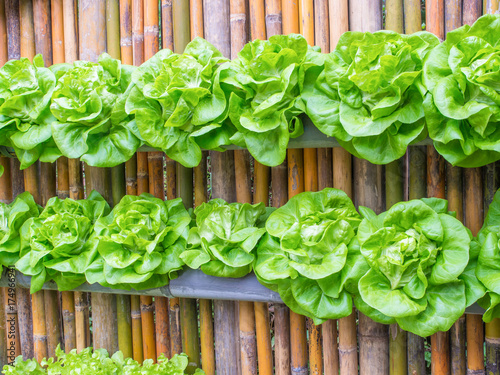 Fotografia  vertical vegetable farm on the wall