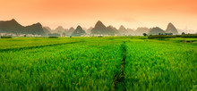 Chinese Rice Field Sunset With...