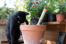 Cat Planting Autumn Flowers