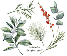 Watercolor Christmas Plant And Berries. Hand Painted Rosemary, Eucalyptus, Cedar, Snowberry And Fir Branches Isolated On White Background. Floral Botanical Clip Art For Design Or Print.