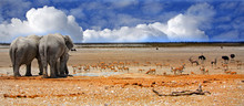 Panorama Of The Rear End Of Two Elephants Looking Out Onto The Etosha Plains With A Blue Cloudy Sky