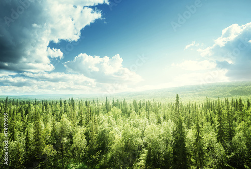 Poster Forets forest in sunny day