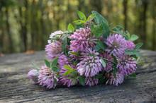 Bouquet De Fleurs De Trèfle Sur Une Table En Bois
