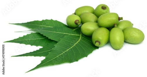 Photo Medicinal neem leaves with fruit