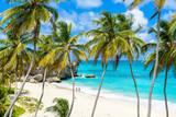 Fototapeta Las - Bottom Bay, Barbados - Paradise beach on the Caribbean island of Barbados. Tropical coast with palms hanging over turquoise sea. Panoramic photo of beautiful landscape.