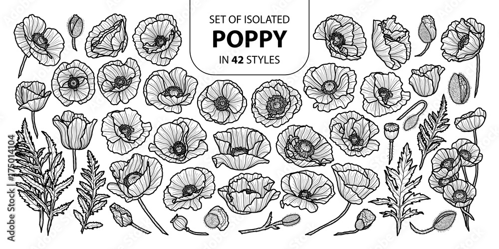 Fototapety, obrazy: Set of isolated poppy in 42 styles. Cute hand drawn vector illustration in black outline and white plane.